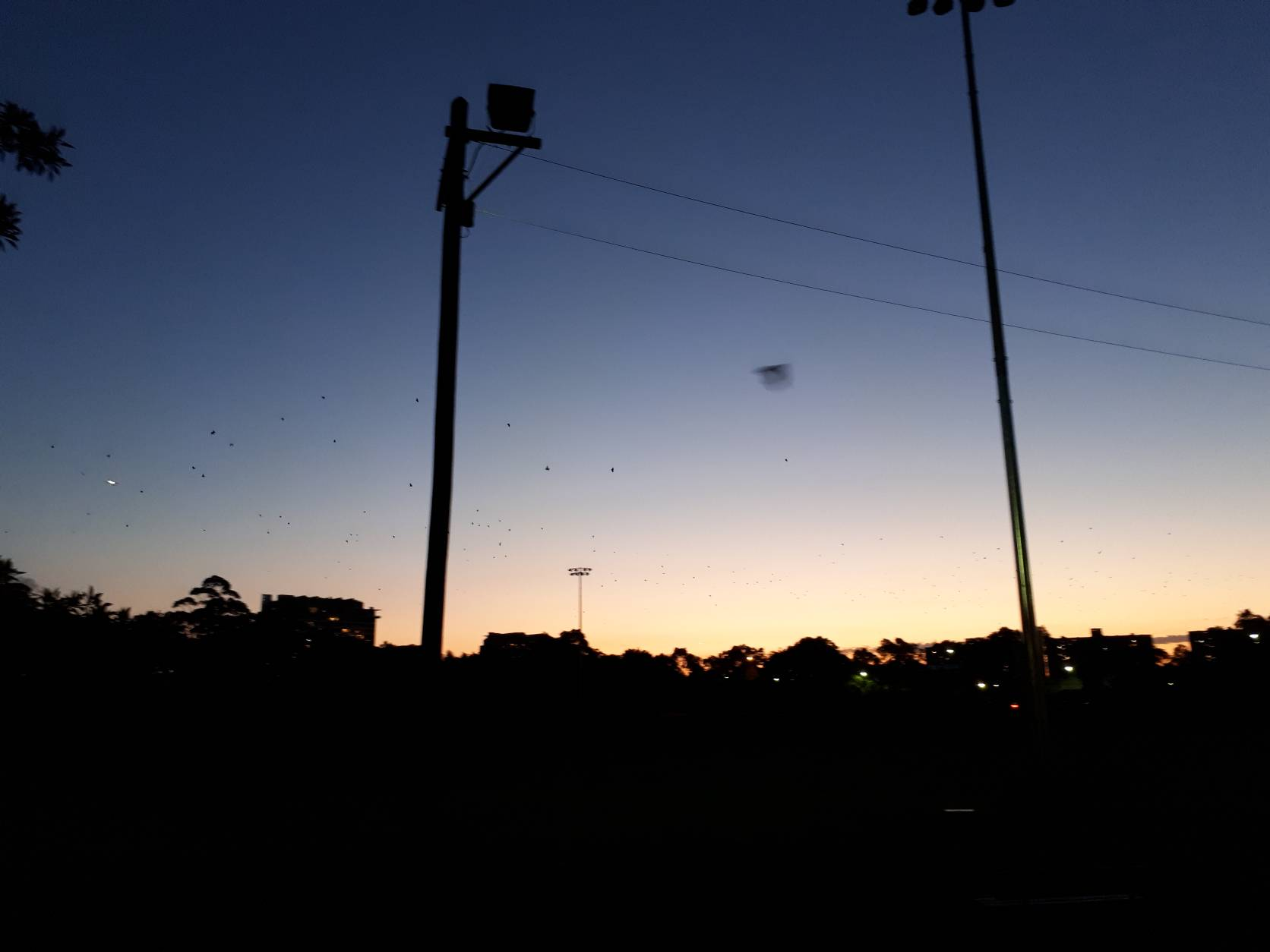 Sydney by dusk with flying foxes
