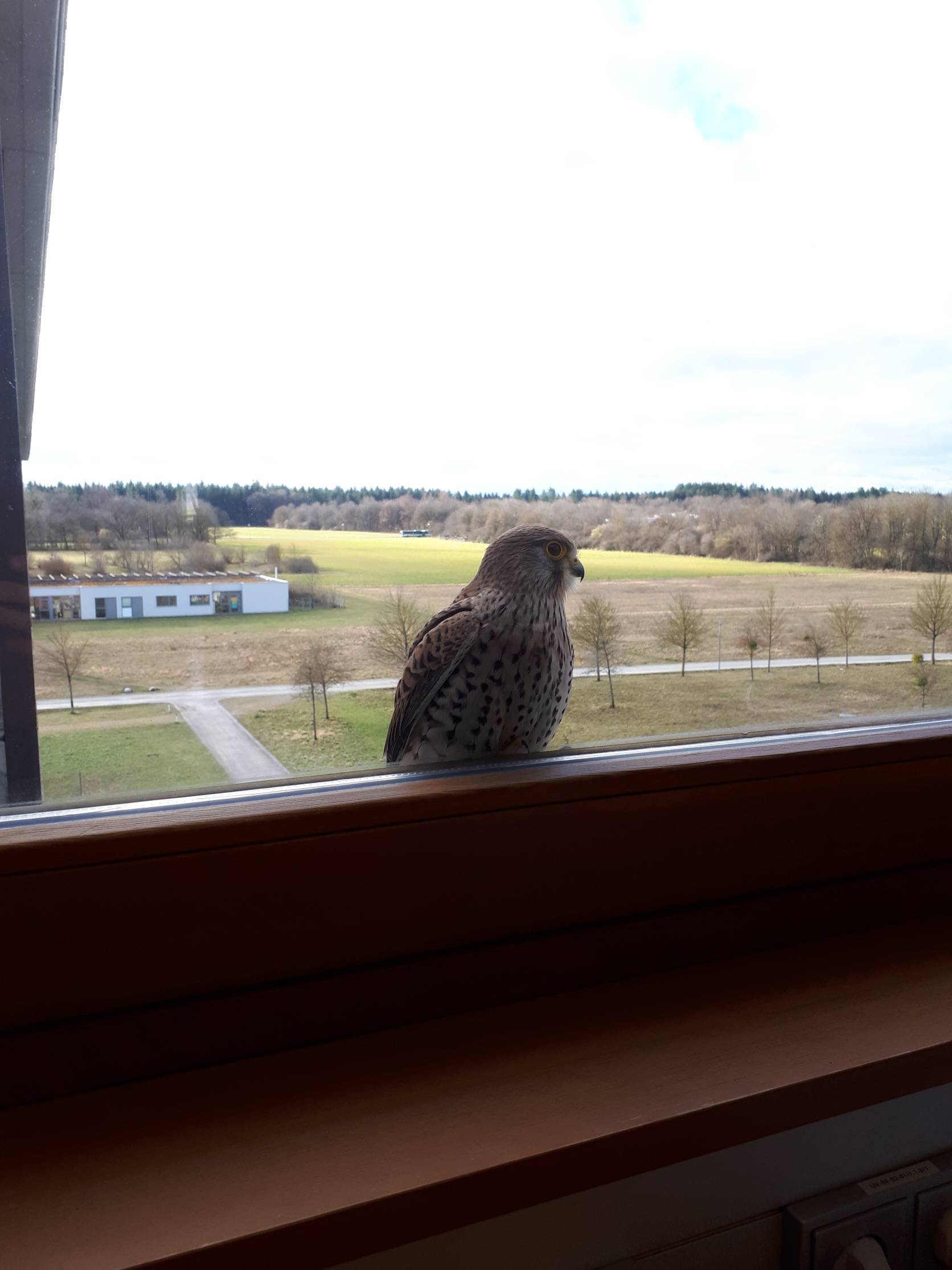 a regular visitor at my office window